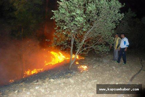 Orman Yangınında Büyük Zarar