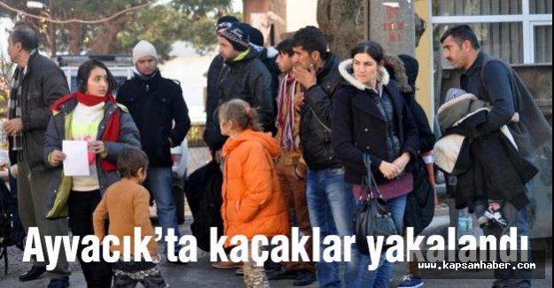 Ayvacık'ta 71 kaçak  yakalandı...