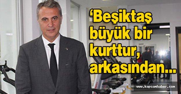 Beşiktaş büyük bir kurttur, arkasından...