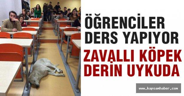 köpek, sınıfta uyuyakaldı