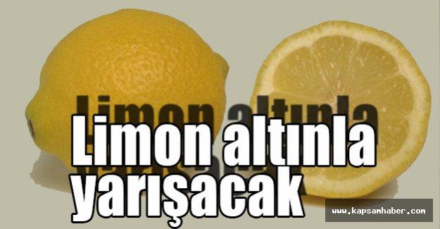 Limon Altınla Yarışacak