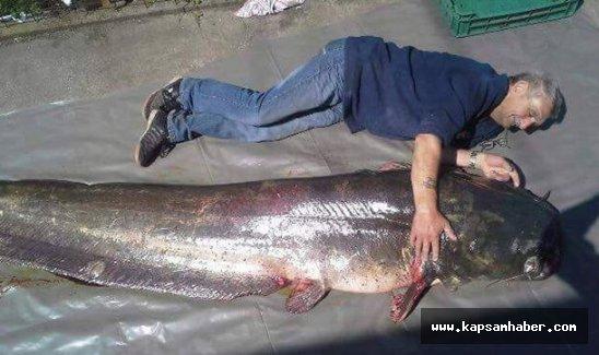 Meriç Nehri'nde oltayla dev bir yayın balığı yakaladı