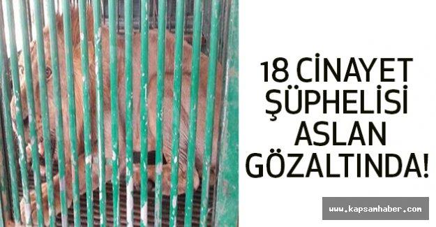 18 cinayet şüphelisi aslan gözaltında!