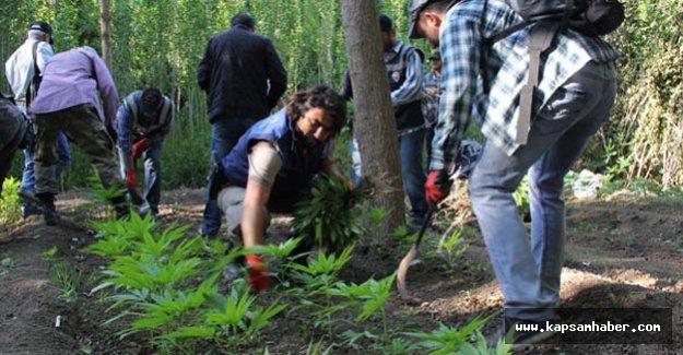 Hevsel Bahçeleri'ne uyuşturucu operasyonu
