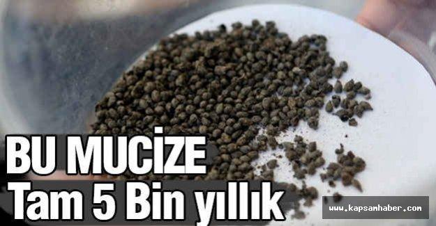 İzmir'de 5 Bin yıllık Mucize Ortaya Çkarıldı