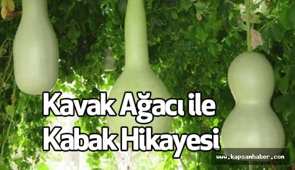 Kavak Ağacı ile Kabak Hikayesi