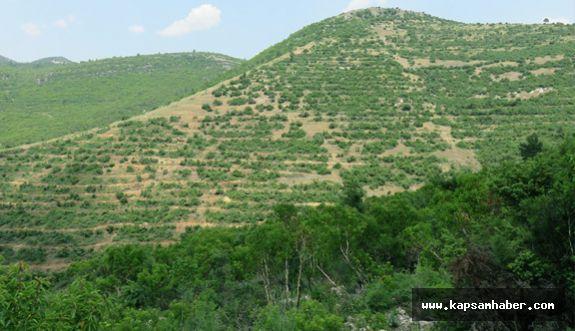 81 milyon 660 bin fidan toprakla buluştu