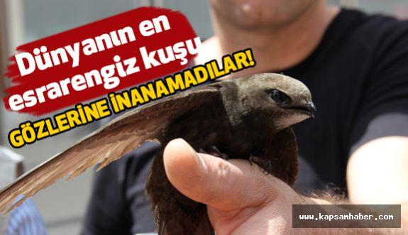 Dünyanın en esrarengiz kuşunu görenler çok şaşırdı