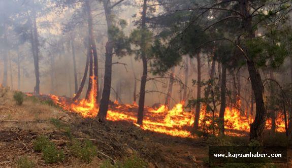 MHP Turgutlu İlçe Başkanı Sayar'dan yangın Açıklaması