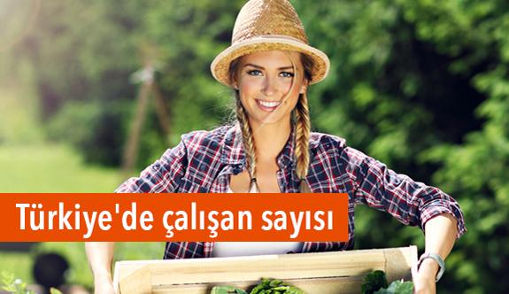 Türkiye'de Çalışanların Sayısı...