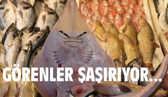Bu Balığı Görenler Şaşırıyor