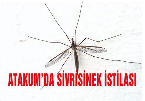 Atakum'da Sivrisineklerin İstilası
