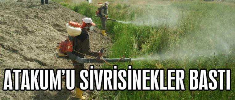 ATAKUM'U SİVRİSİNEKLER BASTI