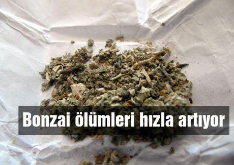 Bonzai ölümleri hızla artıyor