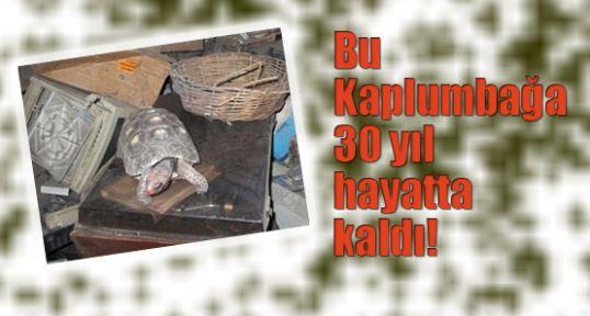 Bu Kaplumbağa 30 yıl hayatta kaldı!