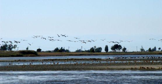 Çukurova Deltası ''kuş'' zengini