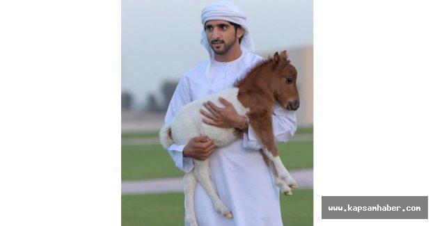 Dubaili Şeyhin Ölümü Herkesi Perişan Etti