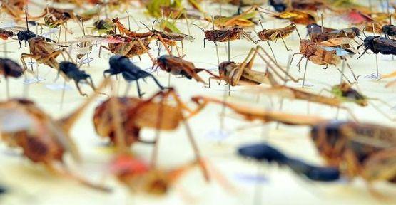 Dünyada 15 bin kan emici böcek var...