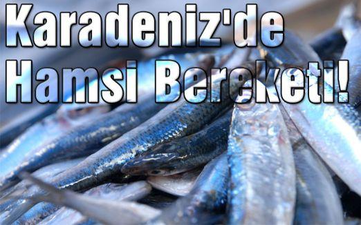 Karadeniz'de Hamsi Bereketi!
