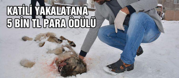 Köpek katilini yakalatana 5 bin lira ödül