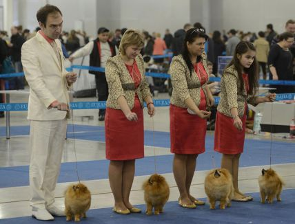 Köpekler Moskova'da buluştu