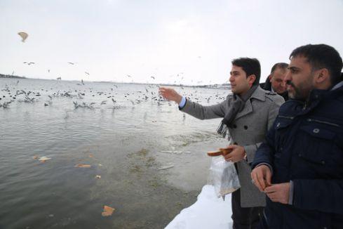 Mogan Gölü'ndeki kuşlar için ekmek kampanyası