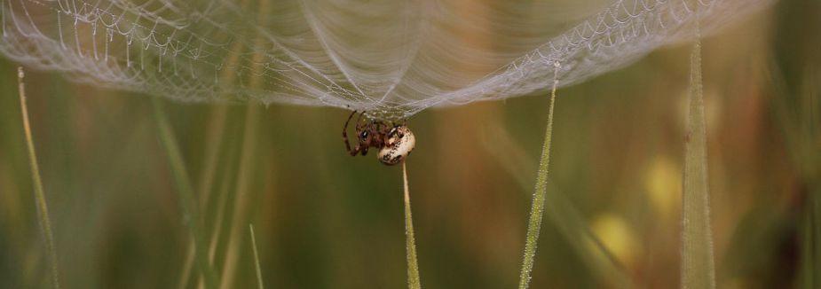 Örümcek ağının