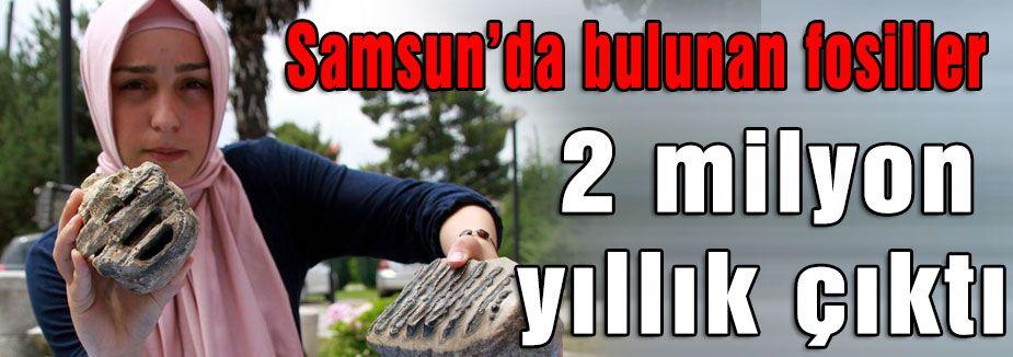Samsun'da Bulunan Mamut Fosilleri 2 Milyon Yıllık