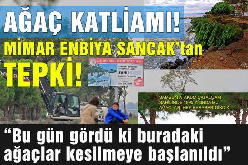 Samsun'da doğa katliamı...