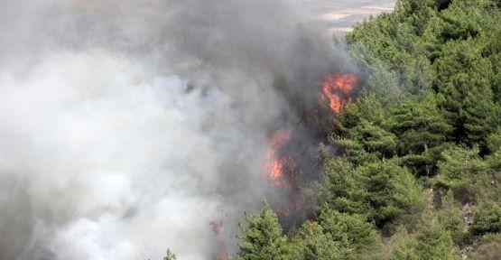 Suriye'deki iç savaş ormanlarımızı da yaktı...