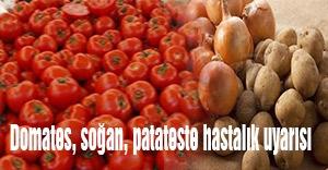 Domates, soğan, patateste hastalık uyarısı