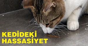 Kedideki Hassasiyete Bakın