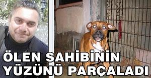 Köpek, ölen sahibinin yüzünü parçaladı