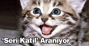 'Seri kedi katili' aranıyor