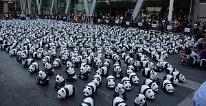 """1600 panda"""" Tayland'da"""