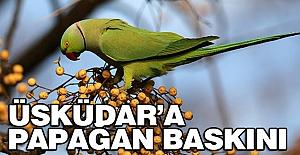 Üsküdar'a Papağan Baskını