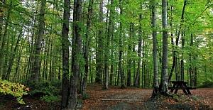 Demokrasi şehitleri için Şehitler Ormanı kurulacak