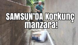 Samsun'da Korkunç Manzara! Öldürüldü mü?
