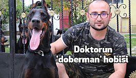 Samsun'da Azerbaycanlı Doktorun 'doberman' hobisi
