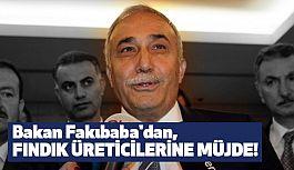 Fakıbaba'dan Fındık Üreticisine Müjde!