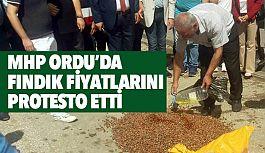 MHP Ordu'da Düşük Fındık Fiyatını Protesto Etti