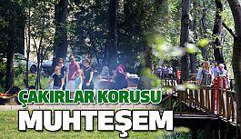 Samsun'da Çakırlar Korusu, Turistlerin Uğrak Noktası Oldu