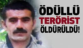 PKK'lı Ödüllü Terörist Öldürüldü!