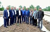Bafra Ovası'nda Karpuz ve Kavun Üreticileri Dert Yandı