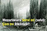 Mezarlıklara Servi (selvi) mi, Çam mı Dikilmeli?