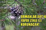 Ormanlar Yapay Zeka İle Korunacak