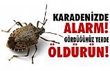 Karadeniz'de Kokarca Alarmı; Gördüğünüz Yerde öldürün!