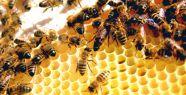 Diyanet: Daha fazla bal almak için arı öldürmek caizdir