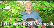 İlk kara dut hasadı Silifke'de yapıldı