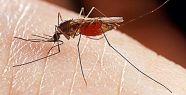İşte Mucize, Sivrisinek Böyle Sokuyor...